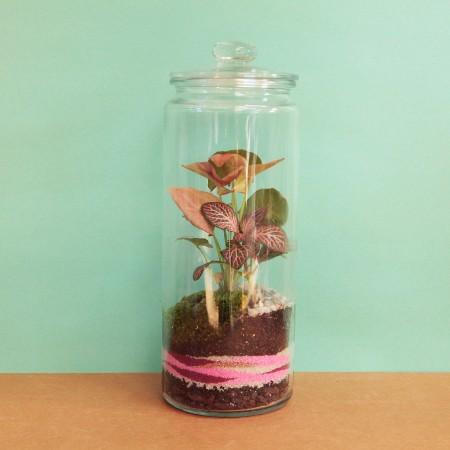 Un terrarium qui voit la vie en rose © Petit monde