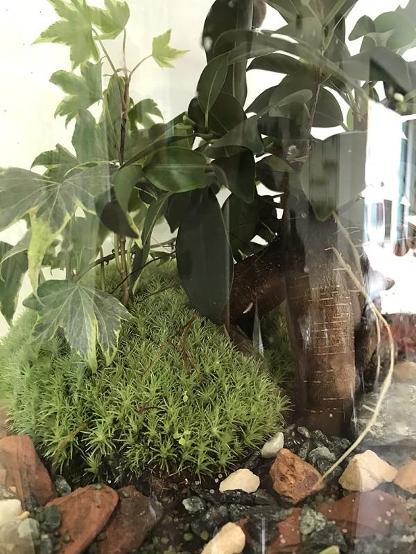Les lianes du Ficus @Petit monde