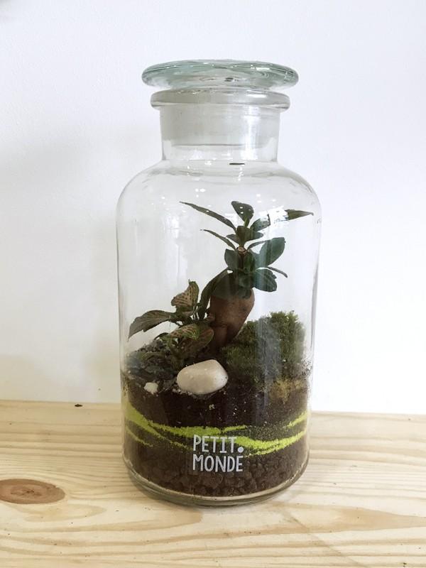 Mini terrarium avec ficus - Petit monde