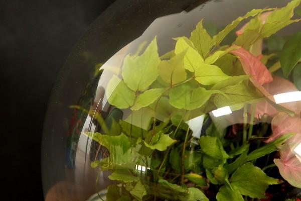 Une grande bulle de verre abritant une végétation luxuriante ©Petit monde