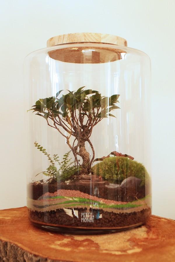 Un petit monde aux couleurs de terre abritant un bonsaï ficus retusa © Petit monde
