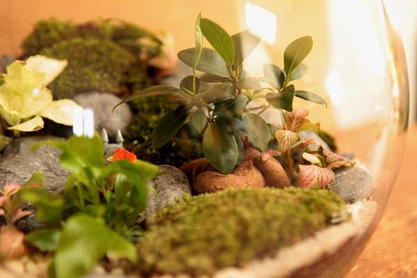 Bulle de verdure ©Petit monde