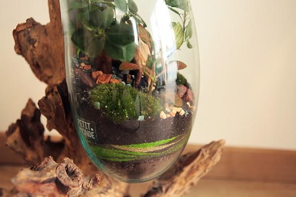 Terrarium racine - Petit monde
